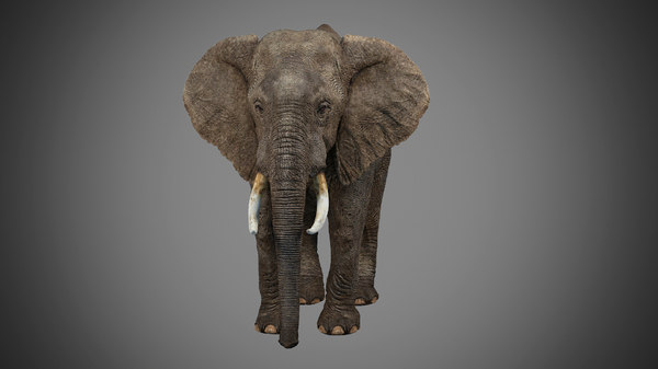 photorealistic elephant walk model