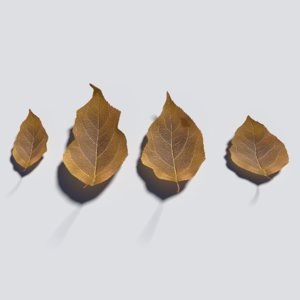 dry leaves model