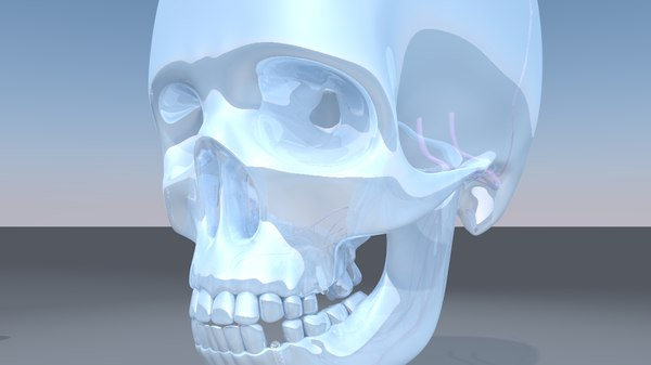 skull jaw dental implant 3D model