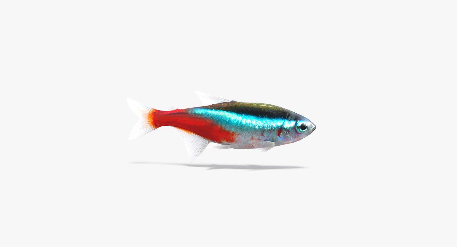 neon tetra fish animation 3D model