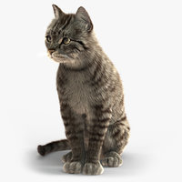 Cat (2) (Grey Tabby) (ANIMATED) (FUR)
