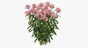 3D flowers plant phlox model