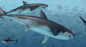 school sharks rigged animation 3D model