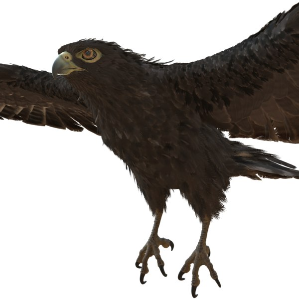 bird eagle 3D model