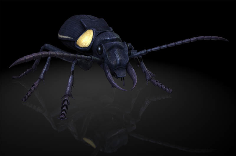 3D anthicidae ant insects