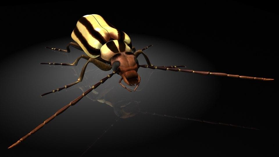 meloidae blister beetle 3D model