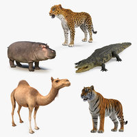african animals 2 3D model