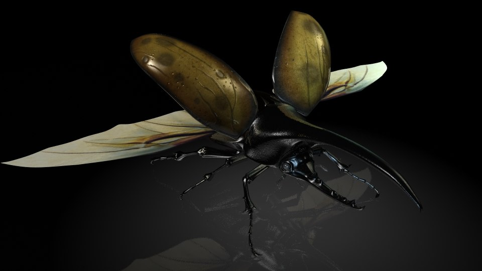 dynastes hercules insects 3D model