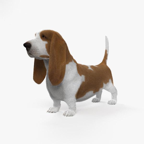 3D basset hound