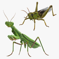 Grasshopper and Mantis 3D Models Collection