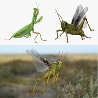 Rigged Grasshopper and Mantis Collection
