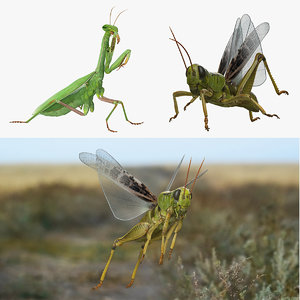 3D rigged grasshopper mantis