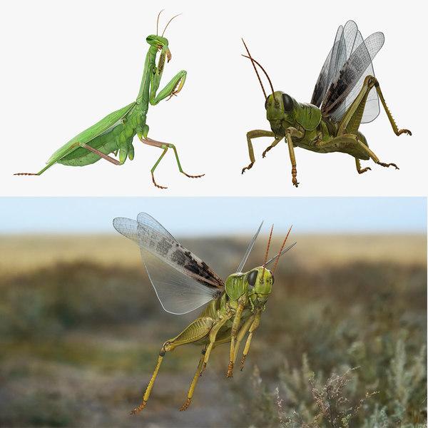 3D rigged grasshopper mantis