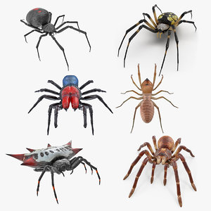 3D spiders 2 model