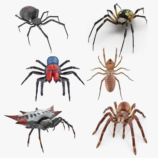 3D spiders 2 model