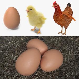 chicken evolution chick 3D model