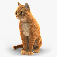 Cat (2) (Orange Tabby) (ANIMATED) (FUR)