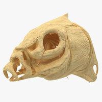3D model fish skull bones