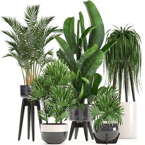 3D model exotic plants