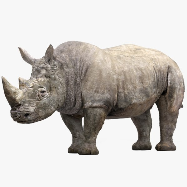 rhinoceros rigged 3D model