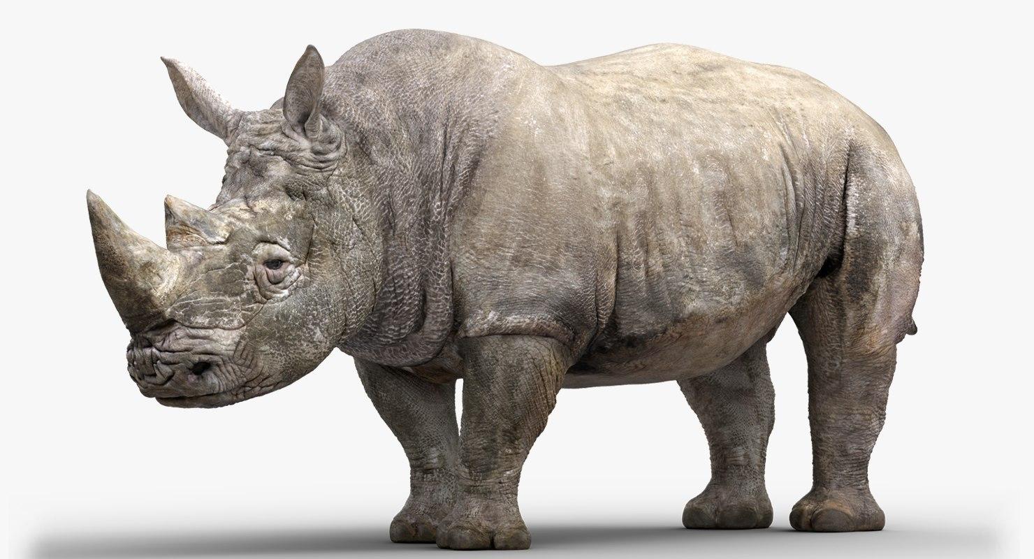 rhinoceros rigged 3D model
