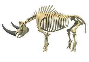 3D rhino skeleton animal
