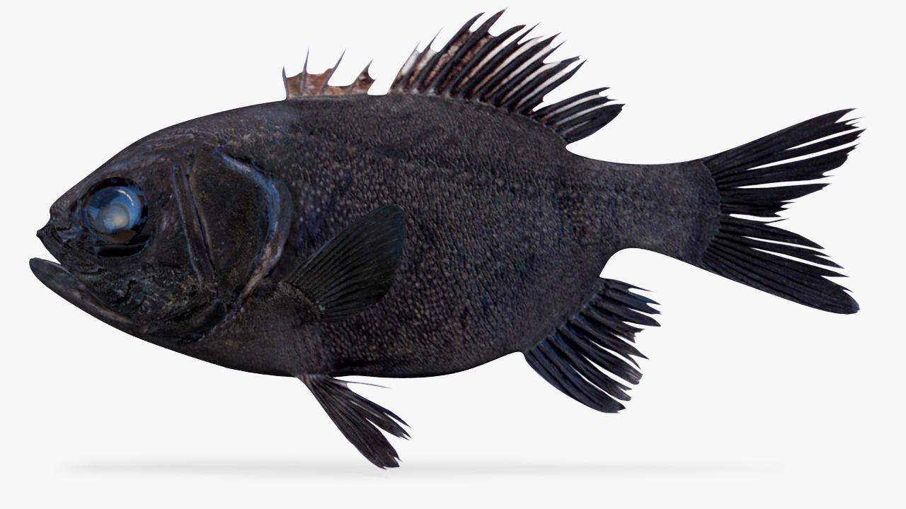 panamic flashlightfish 3D model