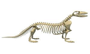 3D model komodo dragon skeleton