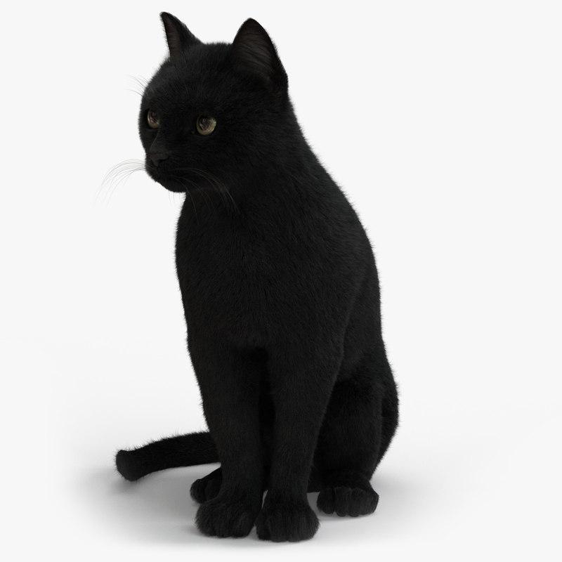 cat animation 3D model