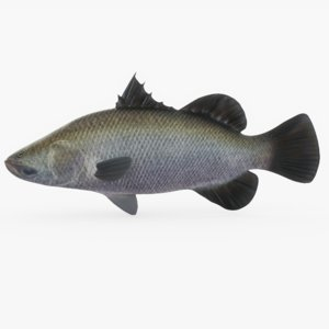 barramundi fish 3D model