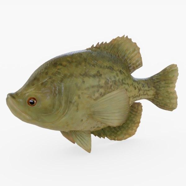 3D model crappie fish
