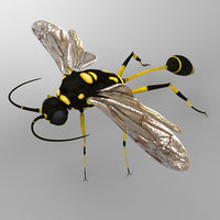 wasp sceliphron 3D model