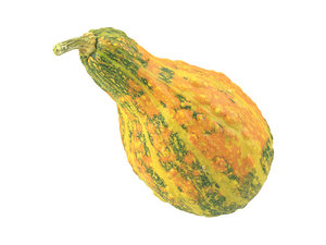 photorealistic scanned decorative gourd model