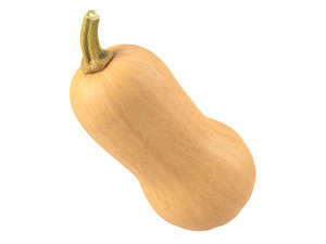 3D photorealistic scanned butternut squash