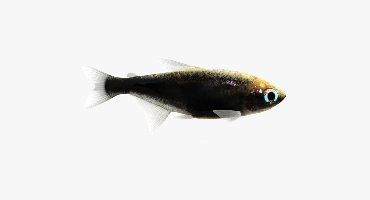 3D model black tetra fish animation
