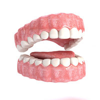 Realistic Mouth teeth