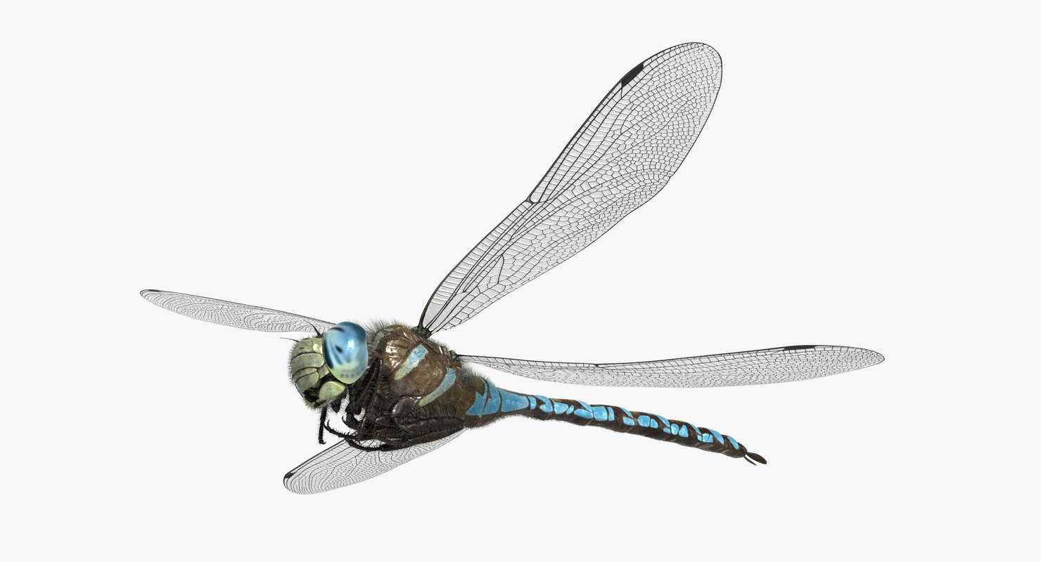 3D dragonfly paddle-tailed darner tail