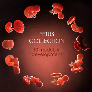 3D fetus 10 development
