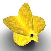 3D exotic fruit krambola model