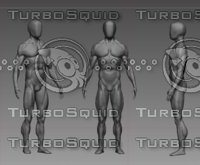 3D anatomy male