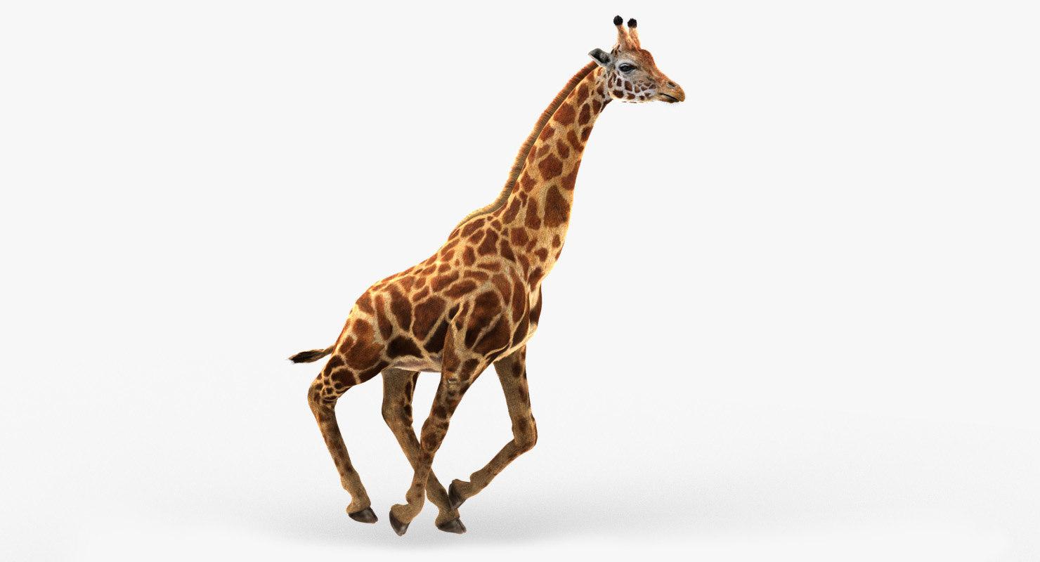 photorealistic giraffe tongue animation 3D model