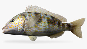 3D pigfish fish