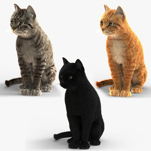 3D cats fur animation model