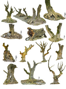 3D ancient forest pack 16k