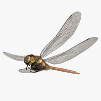 3D dragonfly common darter