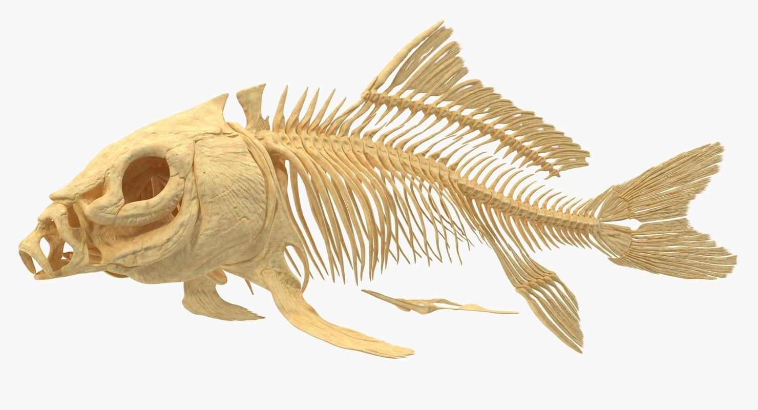 carp skeleton 3D