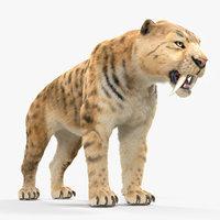 saber tooth tiger fur 3D