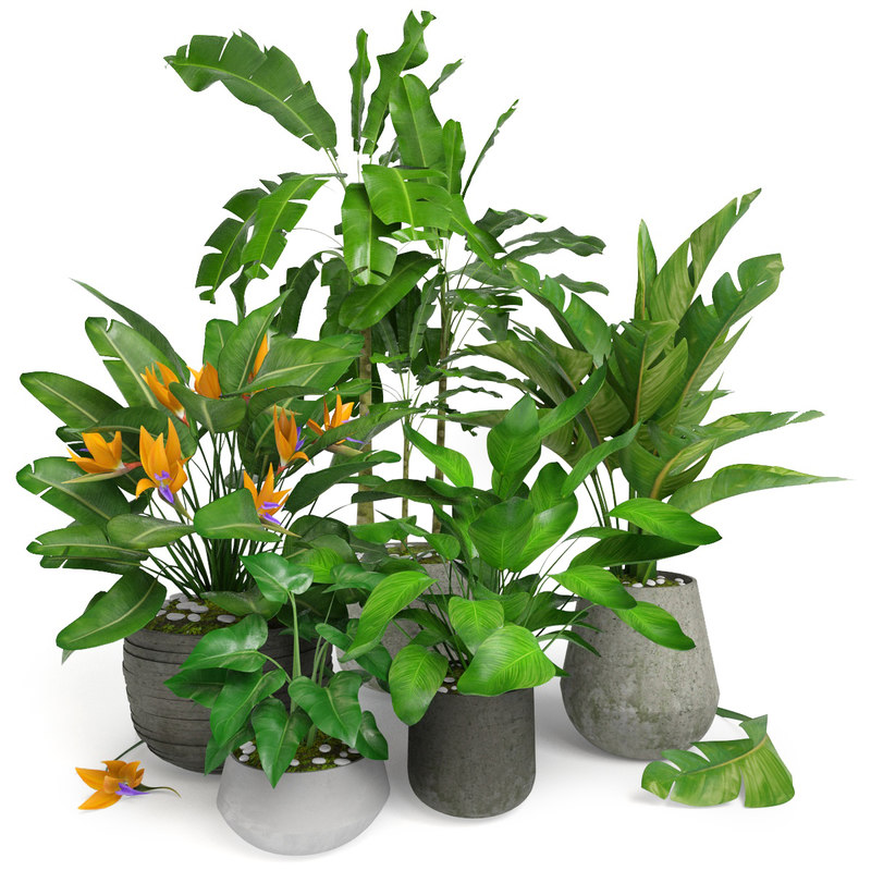 plant trop tropic 3D