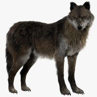 Wolf (Fur) (Rigged)
