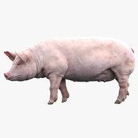 Pig (Rigged)